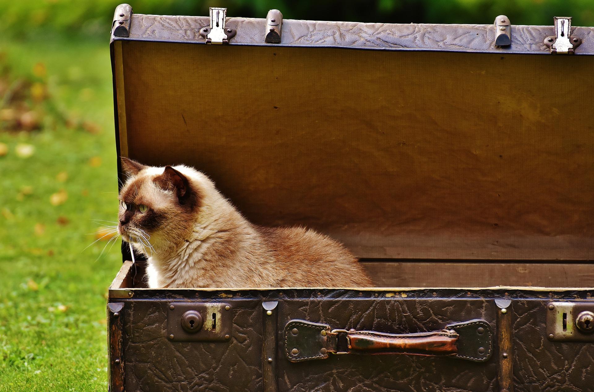 seguro perdida equipaje