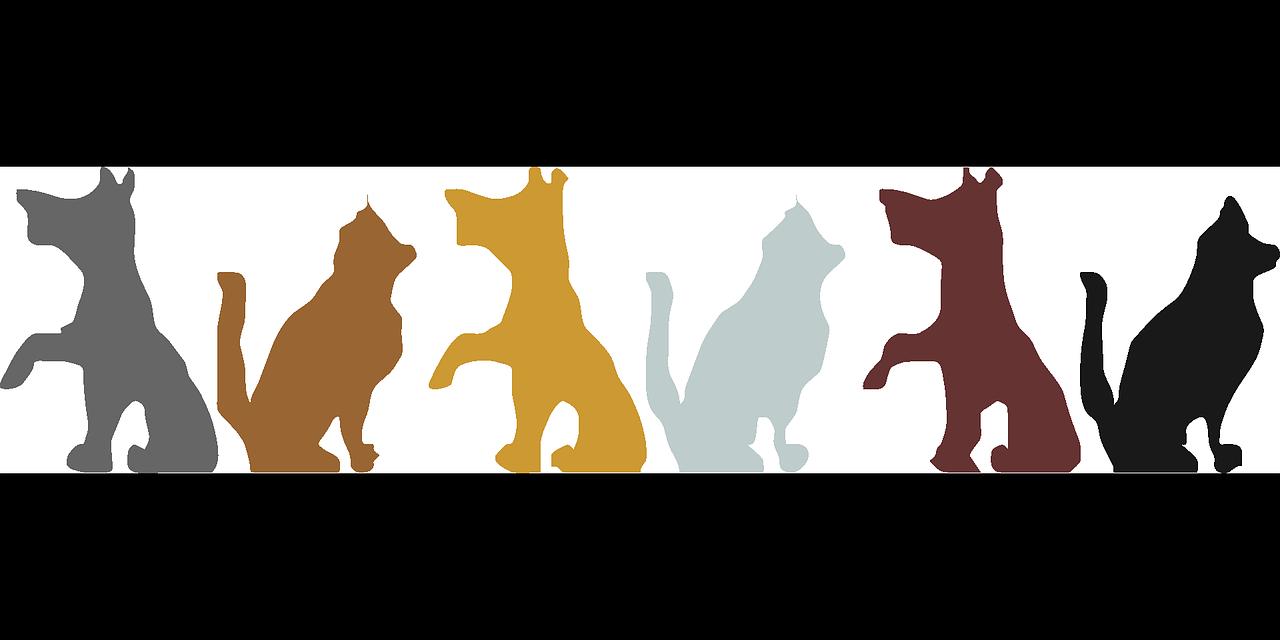 seguros-para-animales-domésticos